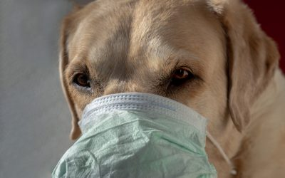 Preparing for life after lock down – dogs and masks!