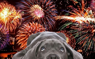 Helping your dog or puppy through fireworks season