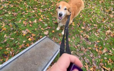 How dogs learn – building associations (positive and negative)