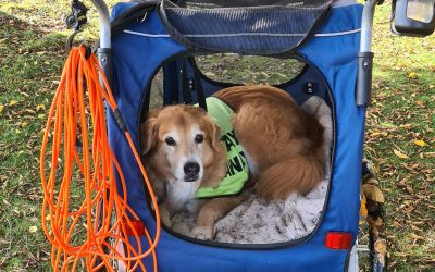 Helping your older dog with arthritis live their best life!