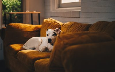 Helping dogs with Separation Anxiety – Why suspending absences is vital