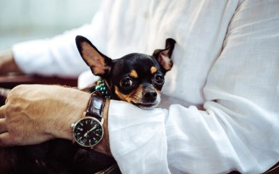 How long does it take to fix a dog's separation anxiety?