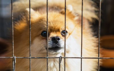 Separation Anxiety – to crate or not to crate?